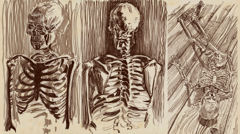 Skeletal Study.